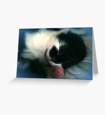 So Cuddly Adorable Greeting Card
