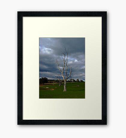 Barren Tree Framed Print