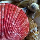 Shells by Andrew (ark photograhy art)