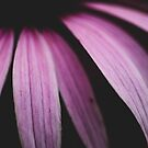 Purple Rain by OLIVIA JOY STCLAIRE