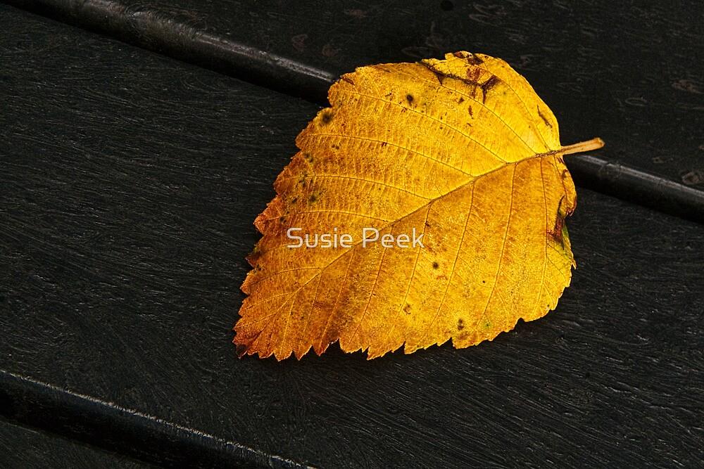 Seasonal Changes 2 by Susie Peek