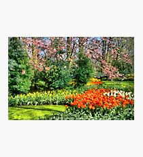 Flowers and Trees Photographic Print