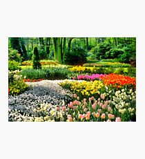 A Gathering of Flowers Photographic Print