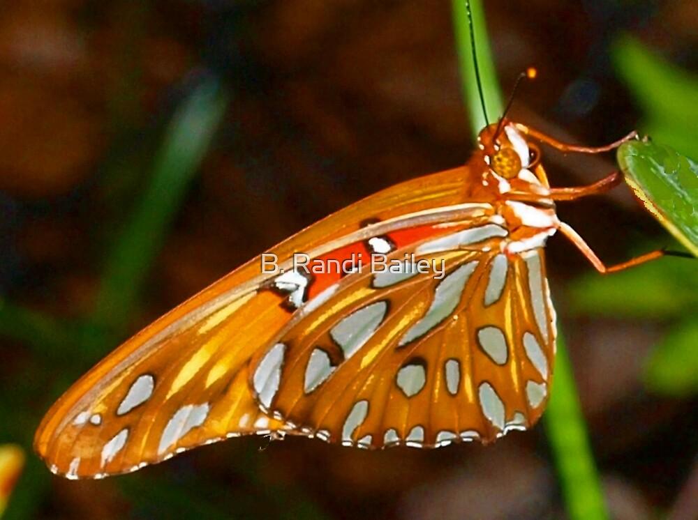 Butterfly beauty by ♥⊱ B. Randi Bailey