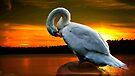 Sleeping swan by LudaNayvelt