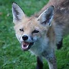 You gonna bark all day little foxy by gottheshot