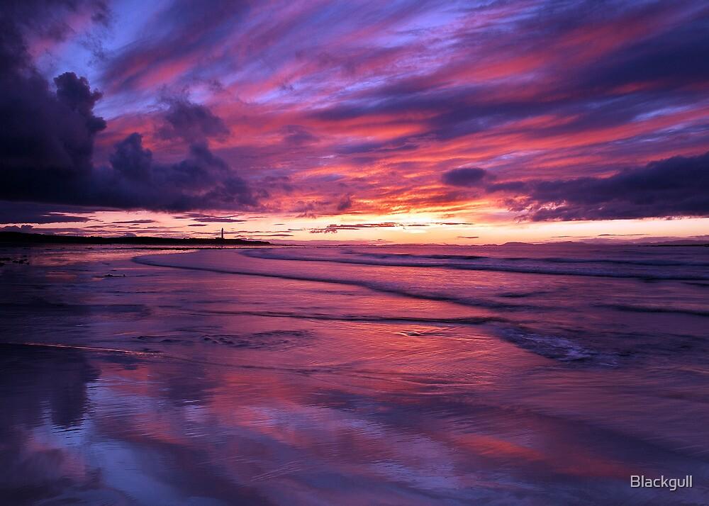 Moray Firth by Blackgull