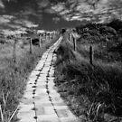 Up the dunes by George Parapadakis (monocotylidono)