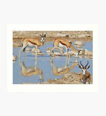 Springbok Antelope - Iconic Wildlife from the Desert Art Print