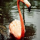 Flamingo Gardens by Melissa  Carroll
