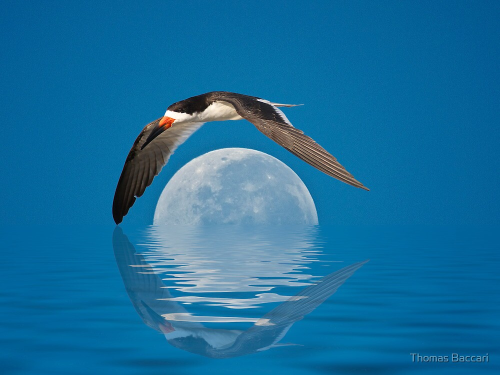 The Skimmer and The Moon by TJ Baccari Photography