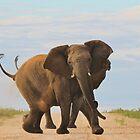 Elephant - Powerful Life by LivingWild