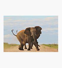 Elephant - Powerful Life Photographic Print