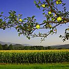 Spotted Appletree with Corn by AntonLee