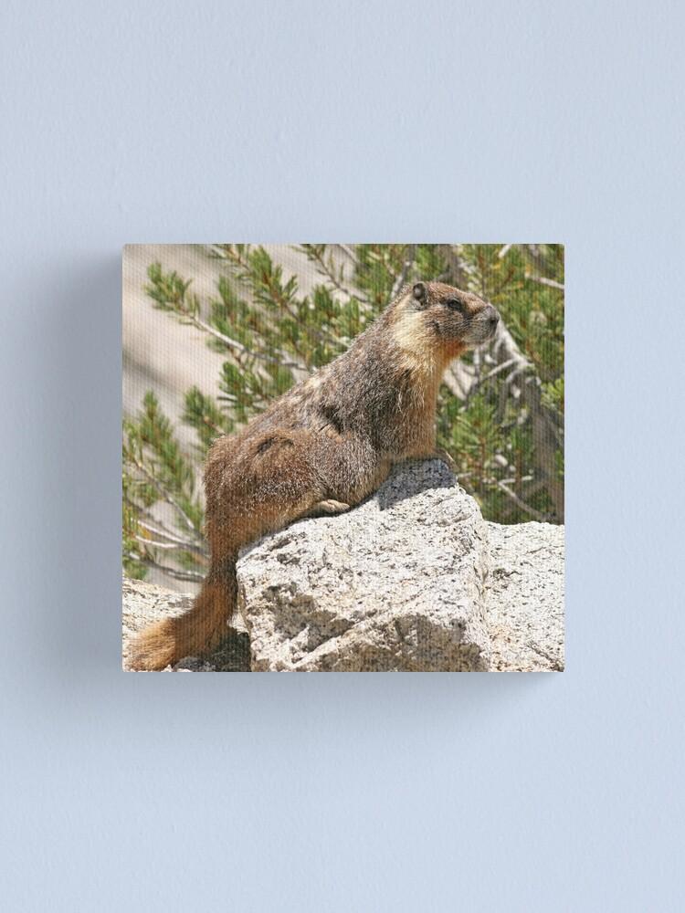 Alternate view of Marmot on rock Canvas Print