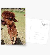 Alpaca (image only) Postcards
