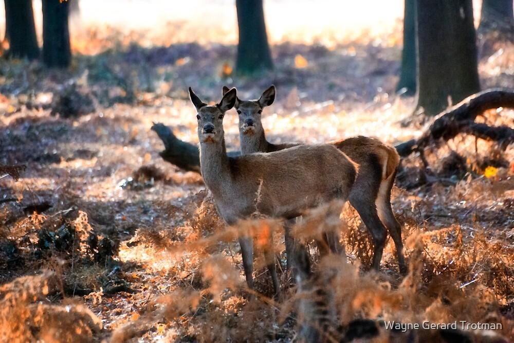 Double Deer by Wayne Gerard Trotman