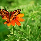 Butterfly Love For Being Color Coordinated by Sunshinesmile83