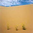 Sunflowers by Alex Burke