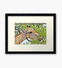 Giraffe - African Wildlife - Pleasure of Food Framed Print