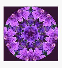 Wild Geranium Kaleidoscope Photographic Print