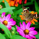 Butterfly Polka Dots by Sunshinesmile83