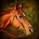 Cadie - Portrait of a Quarter Horse Mare by Laura Palazzolo