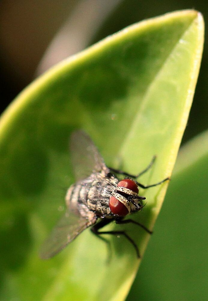 Fly on the leaf by Caity H
