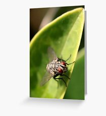 Fly on the leaf Greeting Card