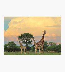 Giraffe - Sunset Storm Watchers Photographic Print