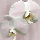 BLUSHING ORCHIDS  by Shirley Kathan-Sayess