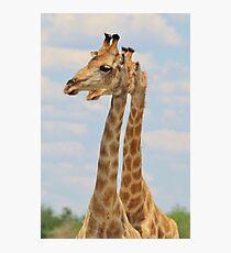 Giraffe - Symmetrical Same Photographic Print