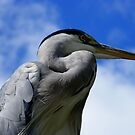 Heron visiting the Zoo... by eithnemythen