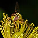 Pollination 13 by Gareth Jones