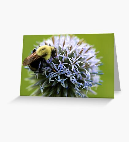 Bumble Bee - Globe Thistle Greeting Card