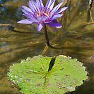 Pretty Lily by Jean-Pierre Ducondi