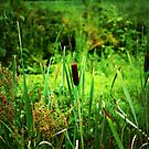 Meadow by Earl McCall