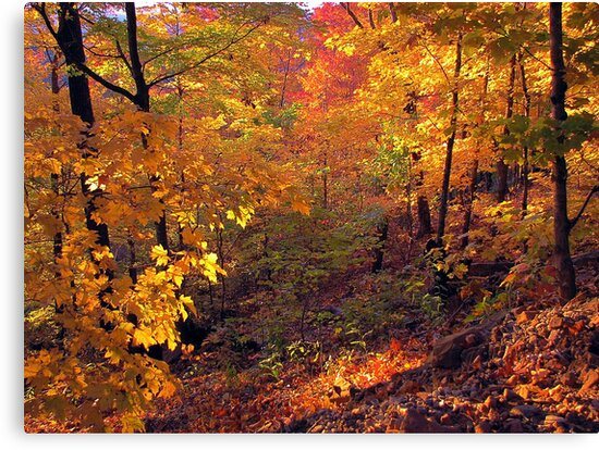 Fiery Forest by NatureGreeting Cards ©ccwri
