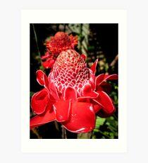 Funky red waxy flower Art Print
