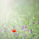 Rain on Poppies and Sweet Peas by Phototrinity