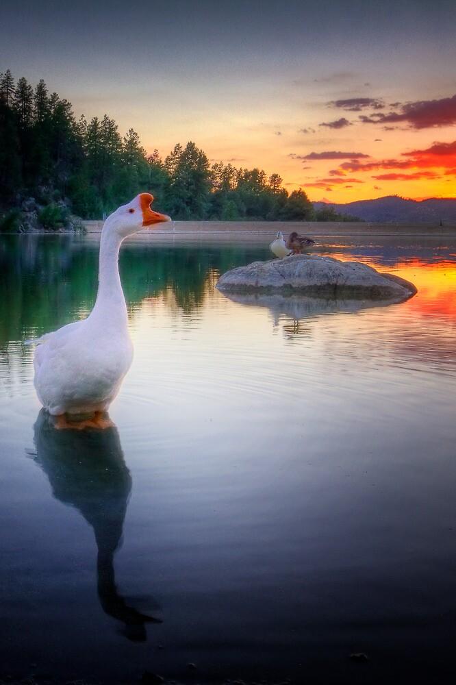 Hey Duck by Bob Larson
