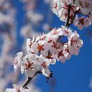 Bluesky Flowers by Catherine Davis