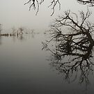 reflection by bally58