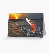 """Windfall"" Heritage Strain Brook Trout Greeting Card"
