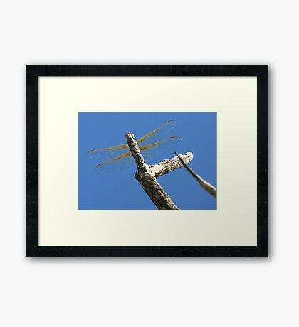 Dragonfly & Seek Framed Print