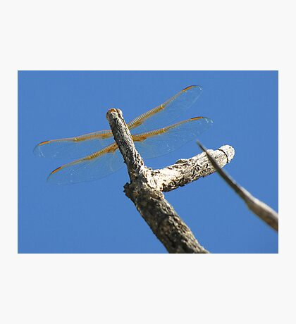 Dragonfly & Seek Photographic Print