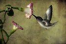 Winged Jewel by Barbara Simmons