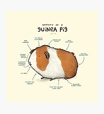 Anatomy of a Guinea Pig Photographic Print