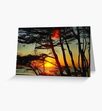Sun setting through the trees Greeting Card