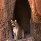 Guest of the Arizona Sonora Desert Museum by Justin Baer
